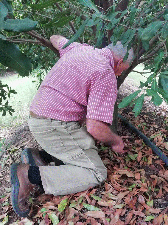 Dr Wayne Hancock in action in a macadamia orchard